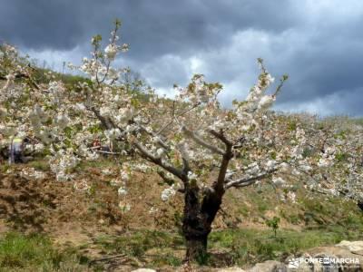 Cerezos flor_Valle del Jerte;senderismo definicion parque nacional los picos de europa año nuevo ma